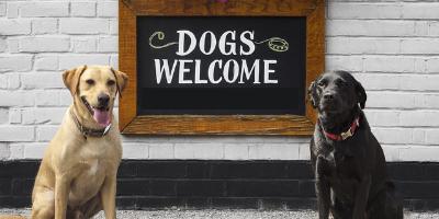 Bancos Pet Friendly en Colombia